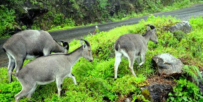 Tourist places in Munnar | Destinations in Munnar | Tourist