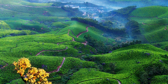 munnar tour packages from bangalore ( bengaluru) to munnar